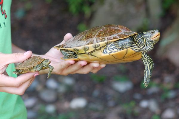 Map Turtle photo #3
